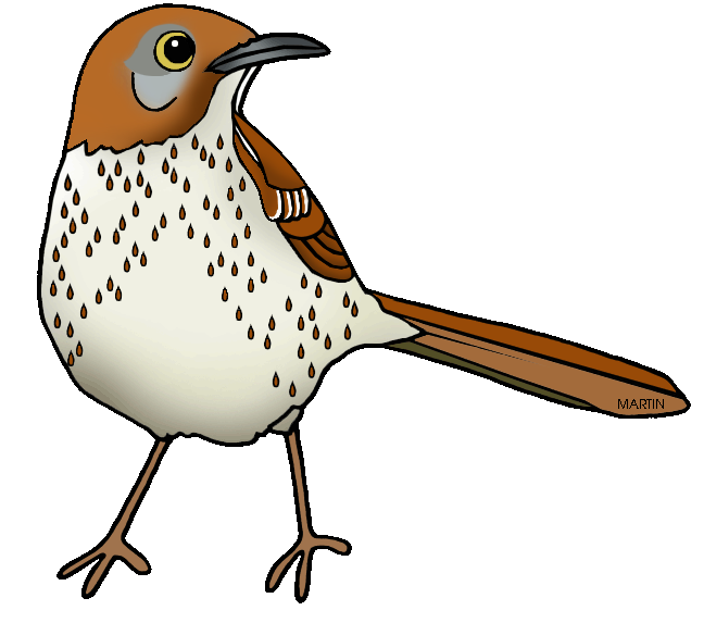 Free United States Clip Art by Phillip Martin, Georgia State Bird ...