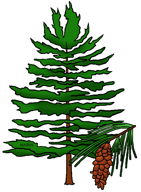 Free United States Clip Art by Phillip Martin, State Tree of Maine ...