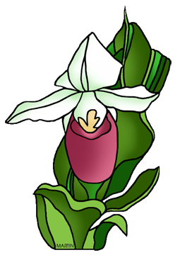 United states clip art by phillip martin minnesota state flower minnesota state flower pink and white ladyslipper mightylinksfo